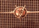 Grille of V16 Caddy
